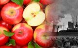 El cambio climático podría matar a la manzana roja