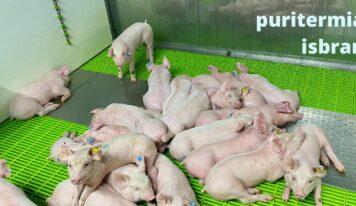 PURITERMIA, una energía limpia que reduce las emisiones y mejora el bienestar animal