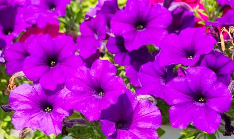 Plantas anuales y bienales
