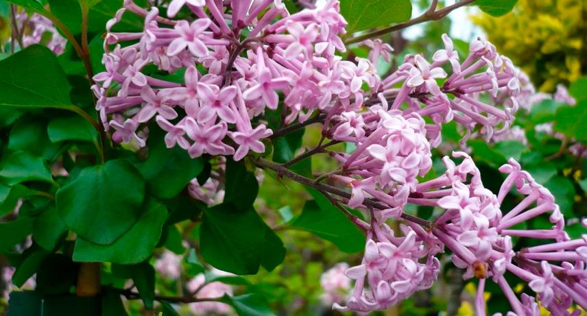 Plantas perennes de floración estival