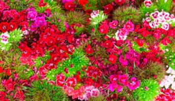 Plantas y flores de jardín: ¿Cuáles son las tendencias?